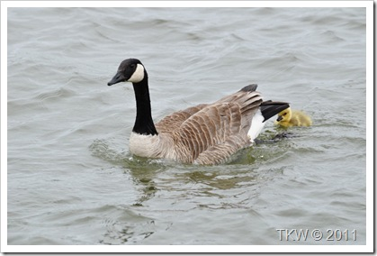 Mother Goose (3)