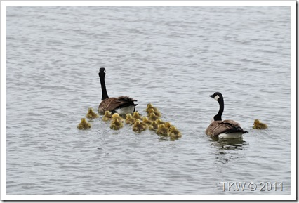 Mother Goose (5)