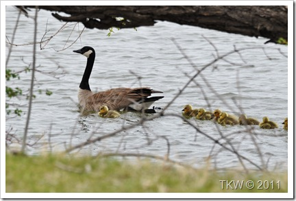 Mother Goose (6)
