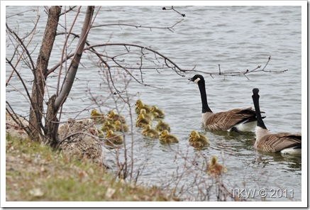 Mother Goose (7)