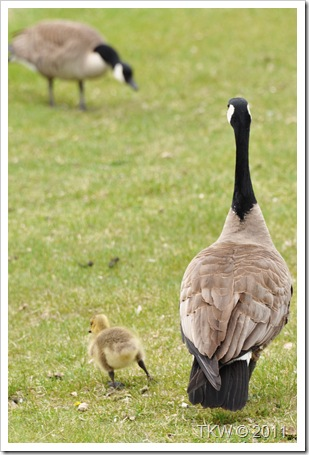 Mother Goose (9)