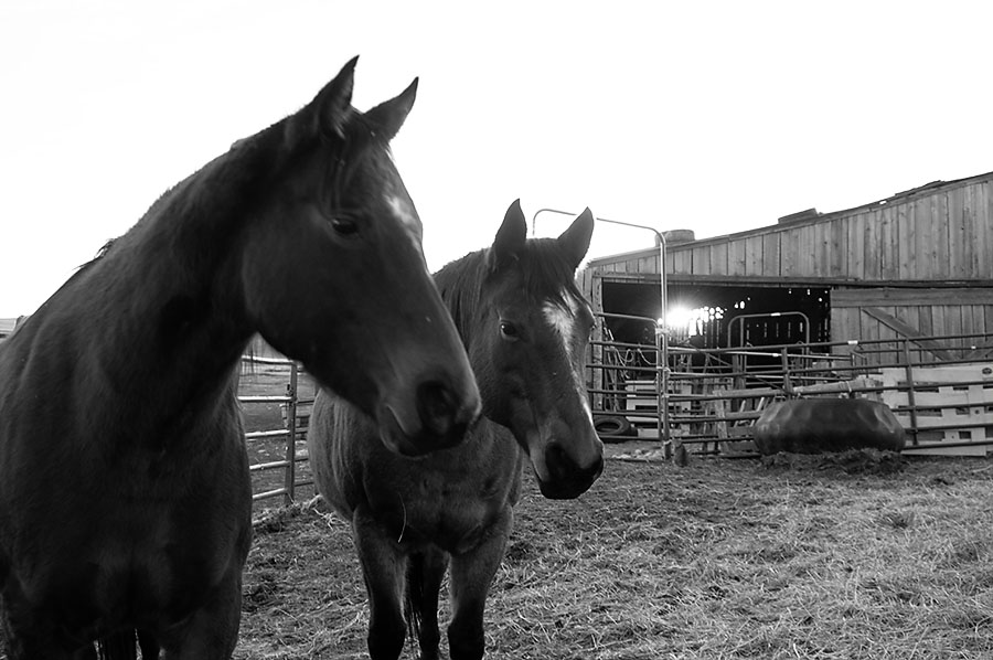 photography, ranching, bucolic, horses, black and white, barn, sunset, A Land of Grass